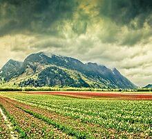 Tulip fields on a stormy day by Eti Reid