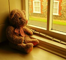 TEDDY LOOKING THROUGH THE WINDOW..WAITING... by ANNETTE HAGGER