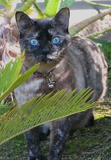 My Blue Eyed Girl by PhotosbyNan