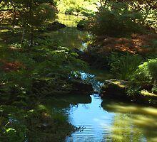 woodland stream by Stan Daniels