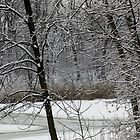 Old Woman Creek In Winter 3 by SRowe Art