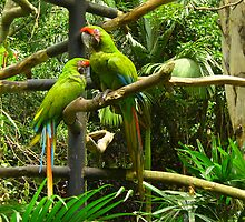 The odd couple, Costa Rica by Guy Tschiderer
