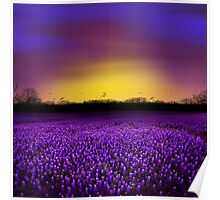 Golden Hour - Purple Floral Field and Dramatic Sky Poster