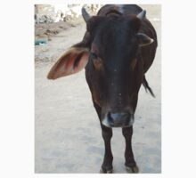 Docile Cow by BhakteesYogis
