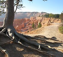 Five roots pointing to Bryce National Park  by loiteke