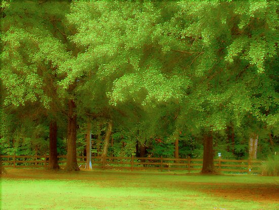 Trees, Yard And Fence by Wanda Raines