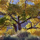Cottonwood Tree In Autumn - Zion by Stephen Vecchiotti