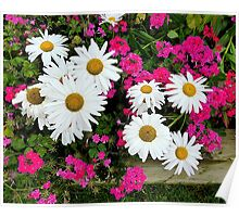 Geraniums And Daisies Poster