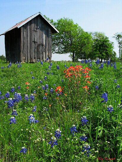 Bluebonnet Outhouse © by Mary Campbell