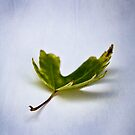 Leaf #2 by David Eastham