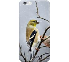 Christmas Goldfinch iPhone Case/Skin