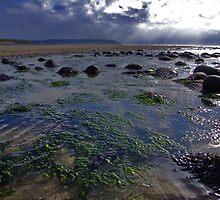 Seaweed Ripples by Ray Smith