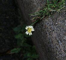 Sidewalk Flower by Barbara Morrison