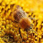 Sticky Pollen by Mark Bateman