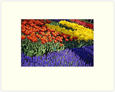 Keukenhof Garden Abstract by Alison Cornford-Matheson