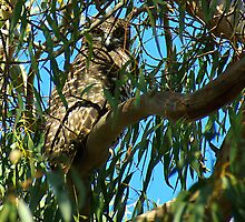 Powerful Owl Family 11 by Biggzie