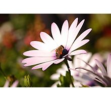 colect my nectar Photographic Print
