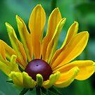 I love sun by LudaNayvelt