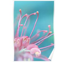 Pink Tangle Poster