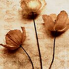 Copper washed poppies. by mariarty