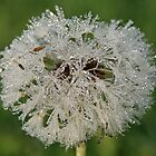 Chandelier Dandelion by BigD