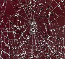 Blood Red Spider Web by Leeo