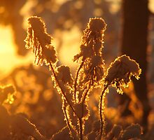 Cold and warm by Petri Volanen
