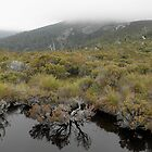 Tarn above Crater Lake, Cradle Mountain,Tasmania, Australia. by kaysharp