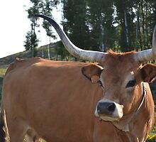 Cow with horns by franceslewis