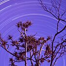 Pandanus star trails by Tony Middleton