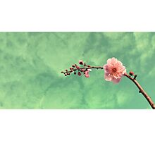 Spring Dreaming Photographic Print