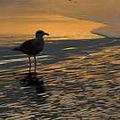 Sunrise at York Beach by Jeannette Sheehy