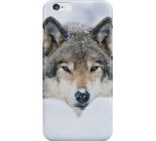 Timber Wolf In Snow iPhone Case/Skin