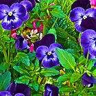 Pansies by John Butler