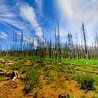 Burnt Trees by Ryan Nowell
