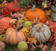 Pumpkins, squash and osage oranges by mnkreations