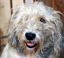 scruff the dog by keki