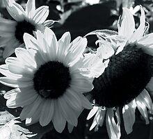 Sunflower Gang by Jill Sprague