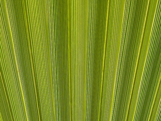 Palmleaf... by Nuh Sarche