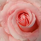 Raindrops On Roses by Diane Schuster
