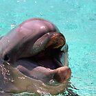 Dolphin by Kristin Nichole Hamm