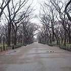 Wintery Central Park by mamachip