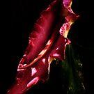 Dragon Arum by Samantha Higgs