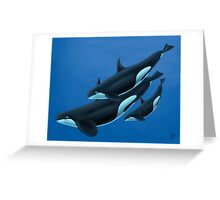 Type D Orcas Greeting Card