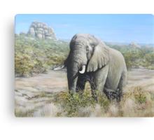 Pilansberg Elephant  Canvas Print