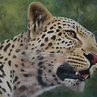 Phil's Leopard - acrylic by Tom Godfrey
