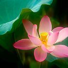 Lotus #47 by Janos Sison