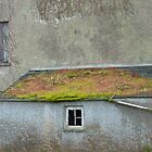 Barn in ruins. by Fara