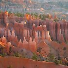 Bryce Canyon morning glory by Meeli Sonn