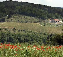 Chianti Vineyard by Jenni Tanner